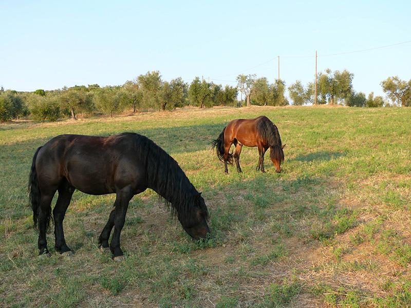 raffaella-pferde