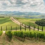 Weinstöcke in der Toskana