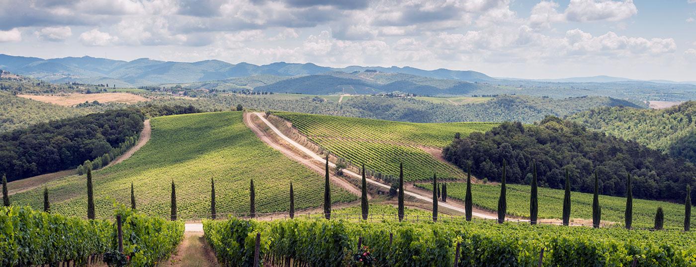 Toscana. Im Chianti. Weingut. Villa Dievole.