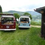 VW-Bullitour im Weinberg
