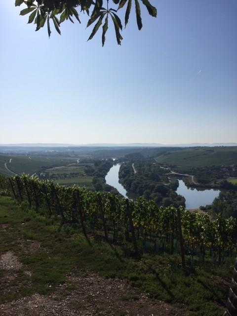 Mainschleife Vogelsburg