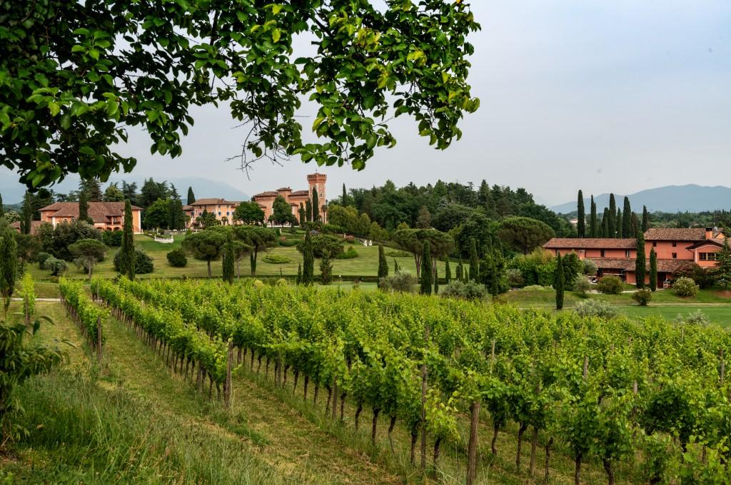 Castello di Spessa_vigne_estate