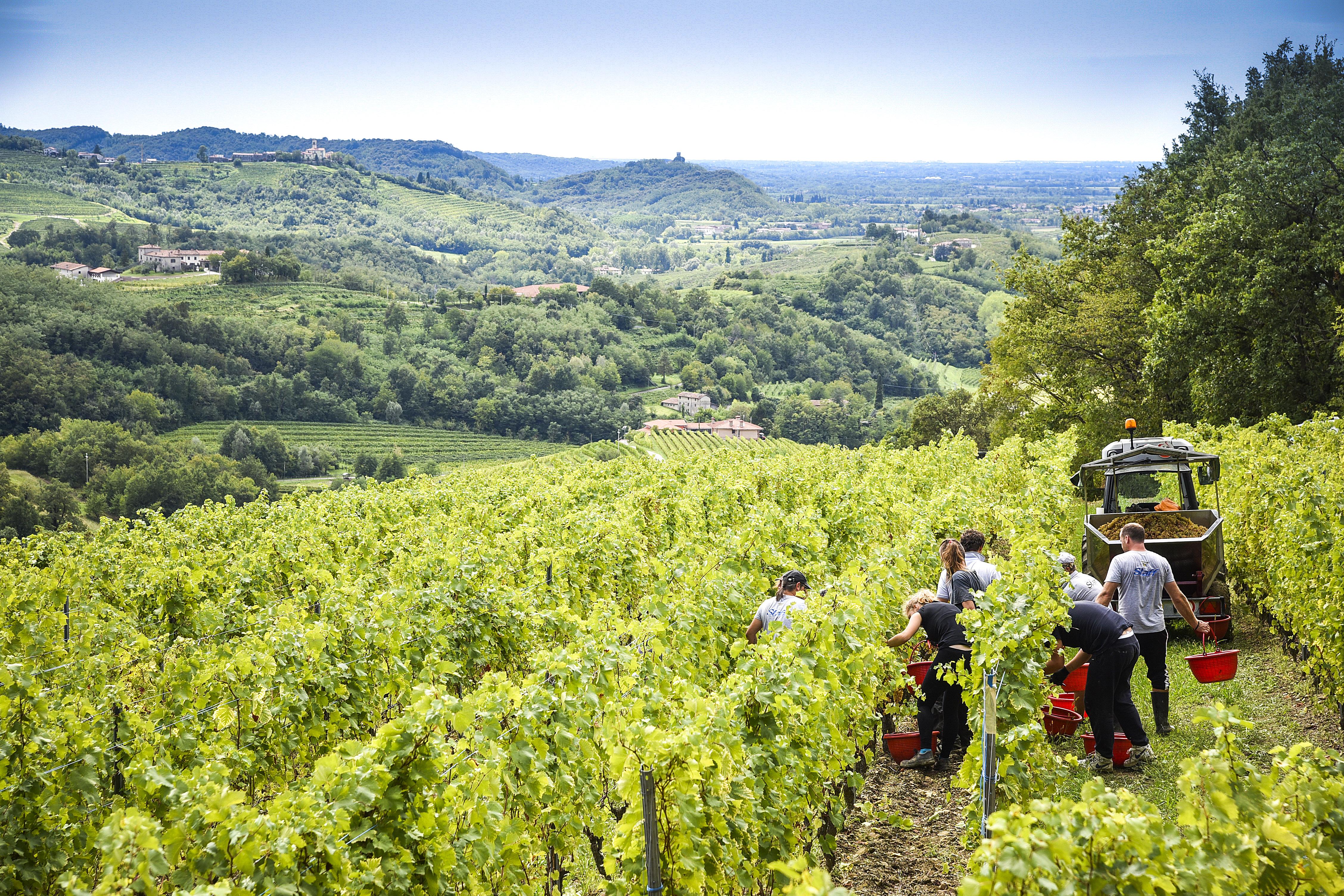 Venica & Venica Wine Resort in den Collio, im Friaul.