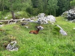 Oberhofalm-Idylle