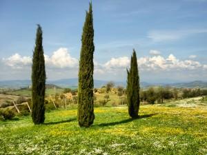 TOS-External_Fattoria Vecchia_Tuscany (5)